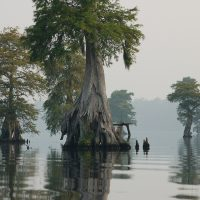 Natchitoches Swamp, Demographics